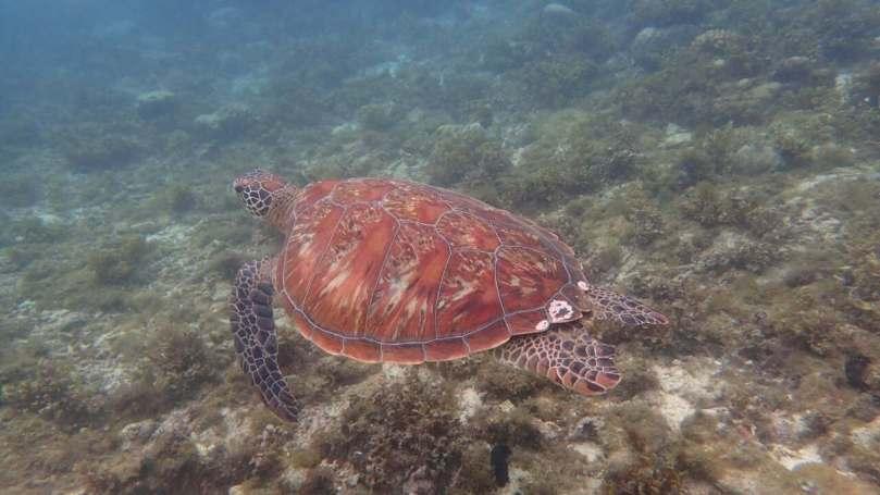 Apo Island92