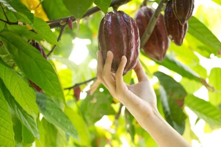 Hiraya Chocolates 3